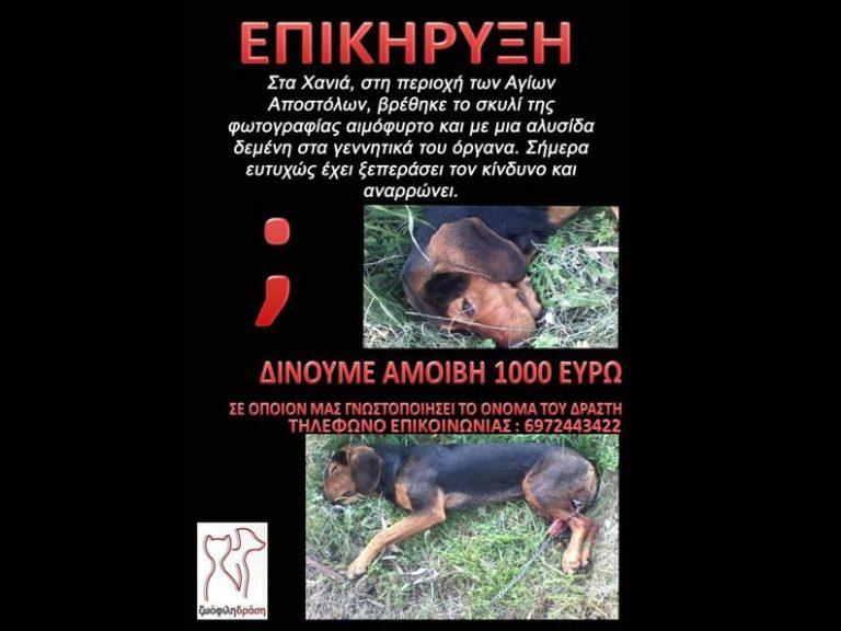 Κρήτη: Επικήρυξαν με 1.000€ τον βασανιστή του σκύλου της φωτογραφίας! | Newsit.gr