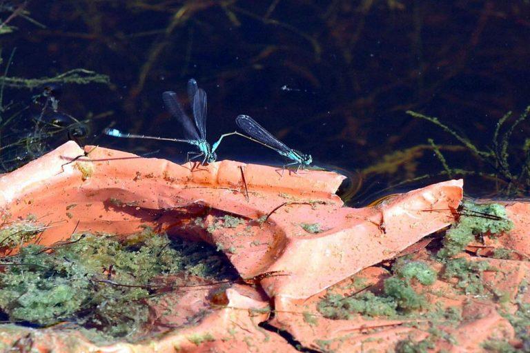 Συναγερμός για το επικίνδυνο κουνούπι στην Κρήτη | Newsit.gr