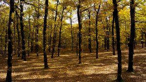 Τραγωδία στην Έδεσσα – Δέντρο καταπλάκωσε 66χρονο