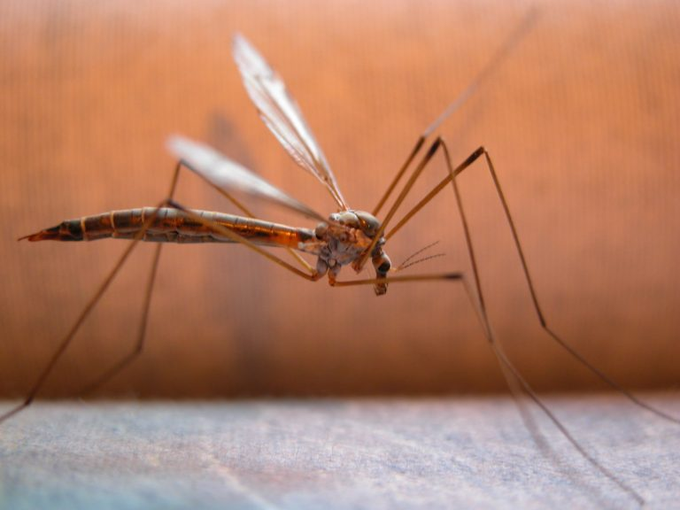 Έκτακτα μέτρα και ανησυχία για τα κουνούπια μετά τον πρώτο θάνατο και στην Αθήνα! | Newsit.gr
