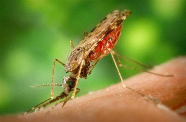 Ιος του Δυτικού Νείλου και Ελονοσία: Πότε τα τσιμπήματα των κουνουπιών γίνονται επικίνδυνα | Newsit.gr