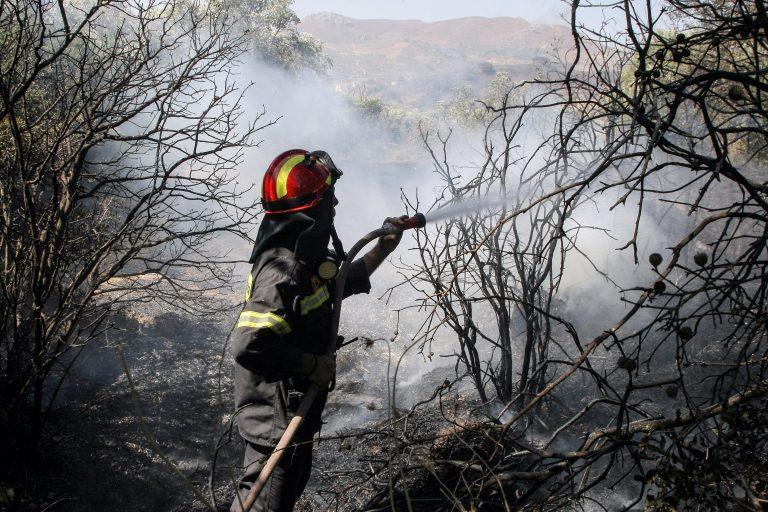Κρήτη: Κτηνοτρόφος και εργάτης κατηγορούνται για την καταστροφή στη Βιάννο | Newsit.gr