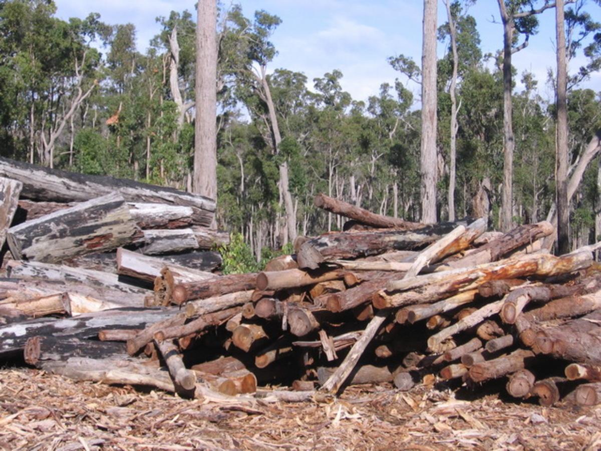 Τον έπιασαν στον Υμηττό να κόβει ξύλα για το τζάκι του! | Newsit.gr
