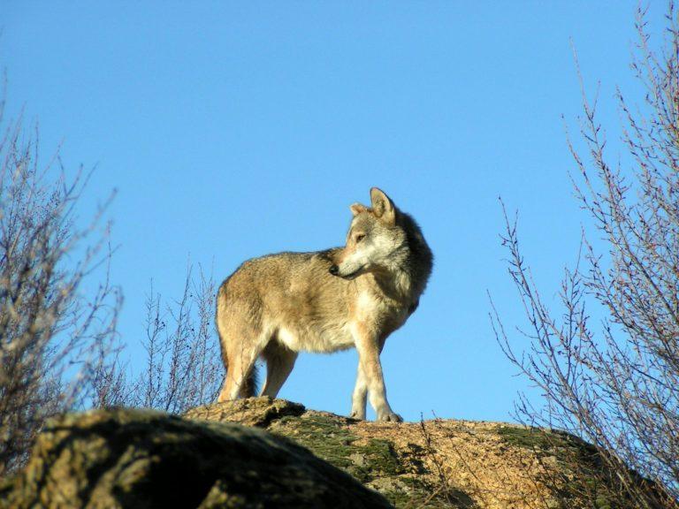 Ρέθυμνο: Έβαλαν το »λύκο» να φυλάει τα »πρόβατα»!   Newsit.gr