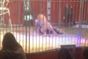 Λιοντάρι δάγκωσε φύλακα και τον έσερνε στο κλουβί – Καρέ καρέ η σοκαριστική επίθεση [vid]