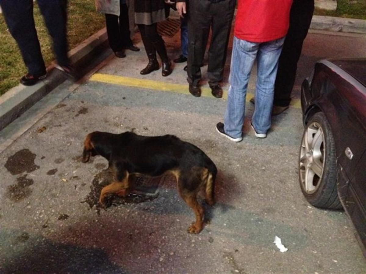 Πάτρα: Συγκινητική κινητοποίηση για μια τραυματισμένη σκυλίτσα – Δείτε το βίντεο!   Newsit.gr
