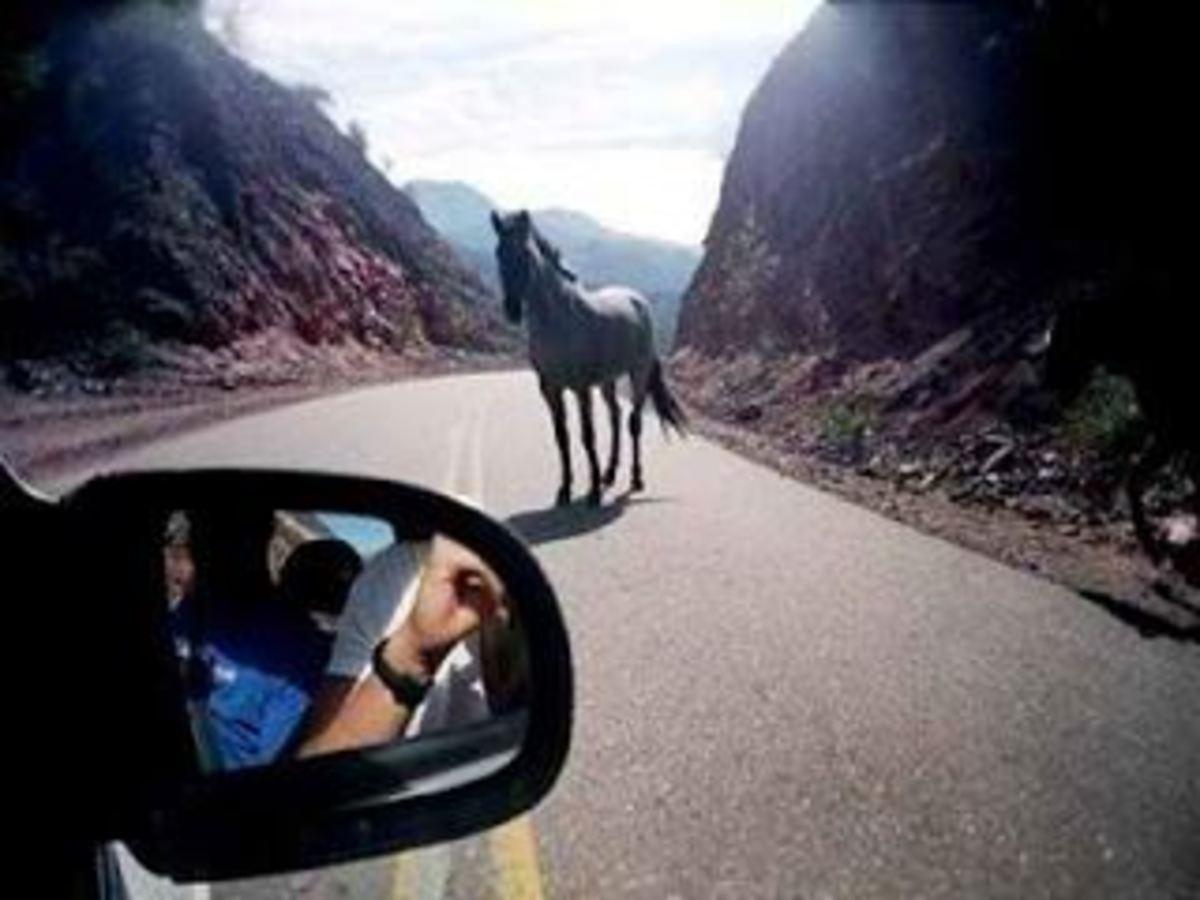 Ηράκλειο: Πανικός από άλογο που ξέφυγε και κινείται σε δρόμο ταχείας κυκλοφορίας! | Newsit.gr
