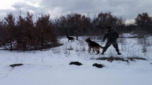 Αυτοί είναι οι σκύλοι του ελληνικού στρατού! {pics}