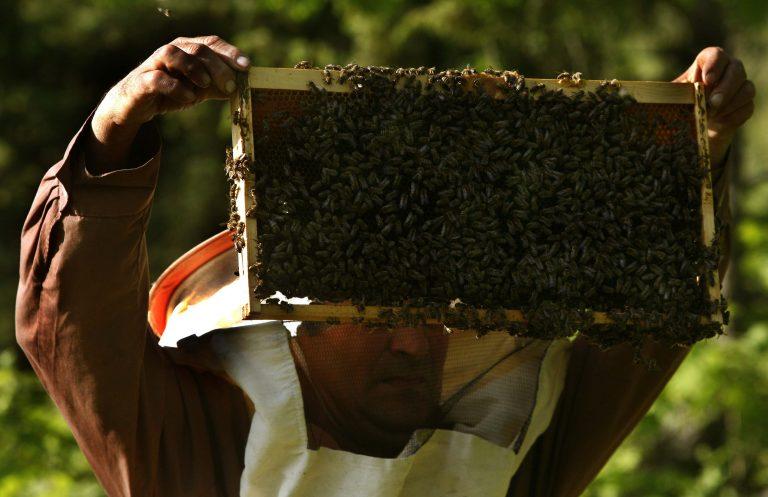 Κορινθία: Πυροβόλησαν σε μελισσοκομείο! | Newsit.gr