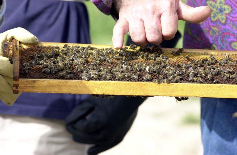 20.000.000 μέλισσες… έκλεισαν το δρόμο!   Newsit.gr