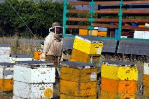 Έκαψαν 200 μελίσσια στη Φωκίδα – Άναυδοι πυροσβέστες και μελισσοκόμοι