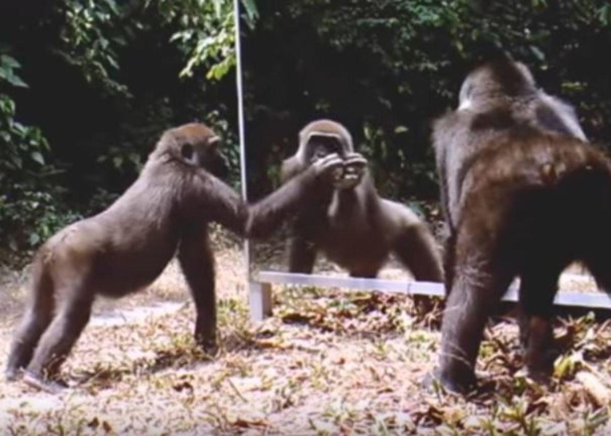 Έβαλαν καθρέφτη μπροστά σε άγρια ζώα. Η αντίδραση τους συναρπάζει! [vid] | Newsit.gr