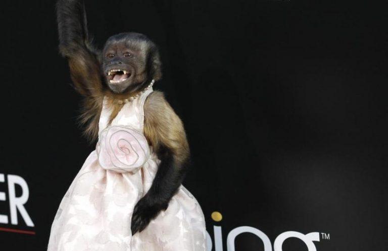Το πιθηκάκι – star που έχει ξετρελάνει το Hollywood | Newsit.gr