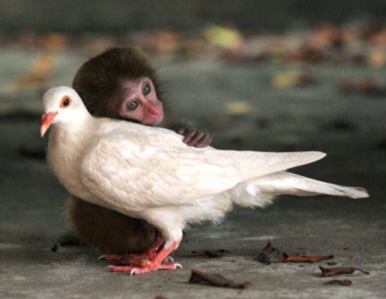 Η αγάπη δεν κάνει διακρίσεις! Δείτε φωτό | Newsit.gr