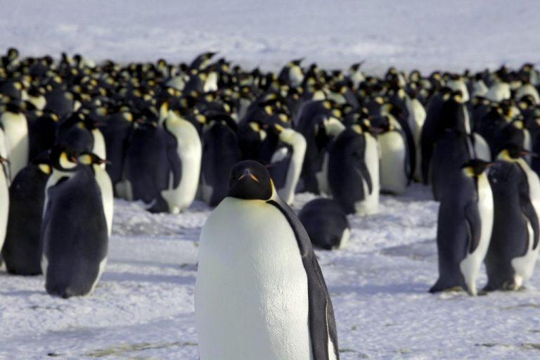 Κι όμως έκλεψαν έναν… πιγκουίνο! ΒΙΝΤΕΟ | Newsit.gr