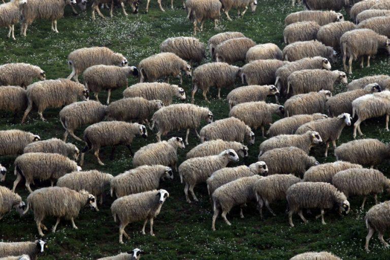 Άρειος Πάγος: Τα πρόβατα θα ανάβουν… φλας! | Newsit.gr