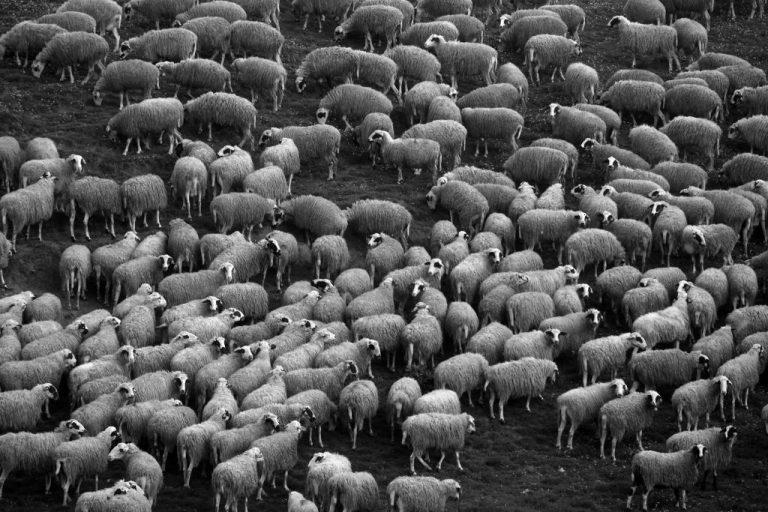 Κρήτη: Βρήκε σφαγμένα τα πρόβατά του | Newsit.gr