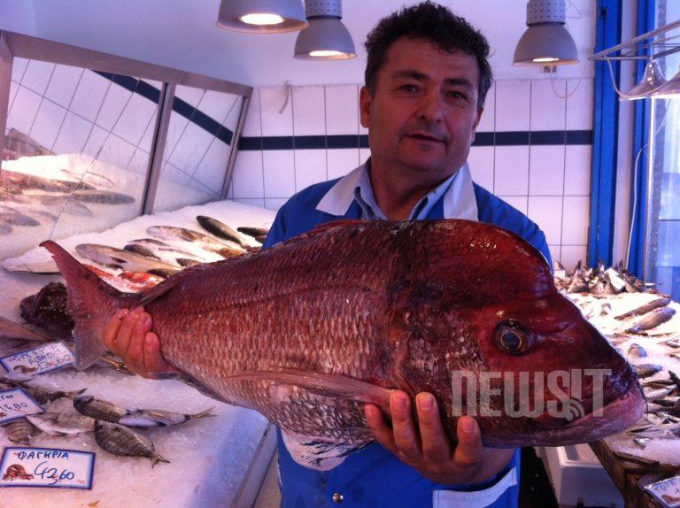 Πως να ξεχωρίζετε τα φρέσκα ψάρια και τα οστρακοειδή – ΦΩΤΟ και VIDEO | Newsit.gr