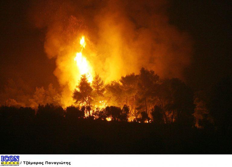 Χαλκιδική: Στάχτη μισό στρέμμα δάσους | Newsit.gr