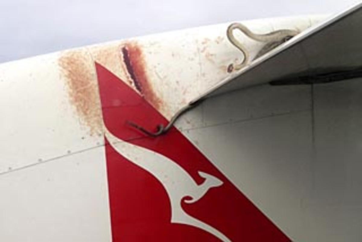 Πύθωνας 3 μέτρων … ταξίδεψε στο φτερό αεροπλάνου! | Newsit.gr