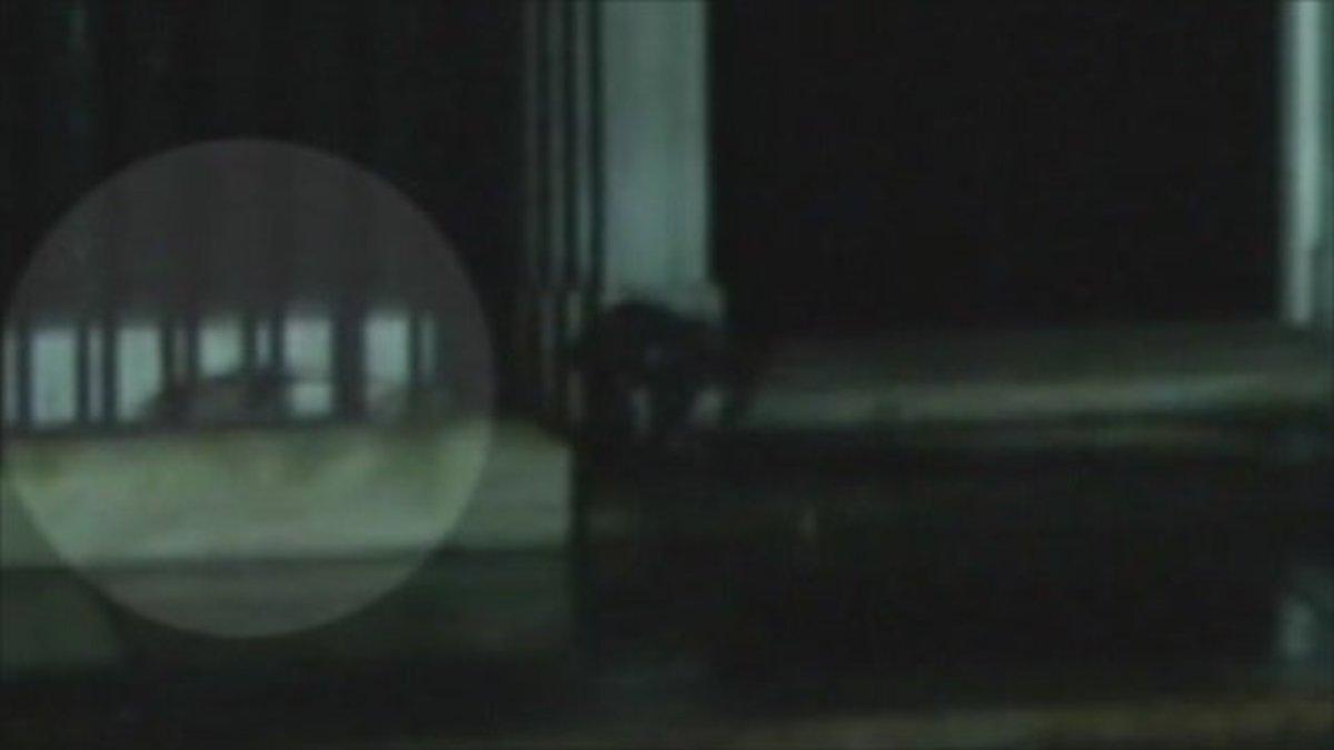 Ποντικός αλωνίζει στο γραφείο του πρωθυπουργού – Δείτε το video | Newsit.gr