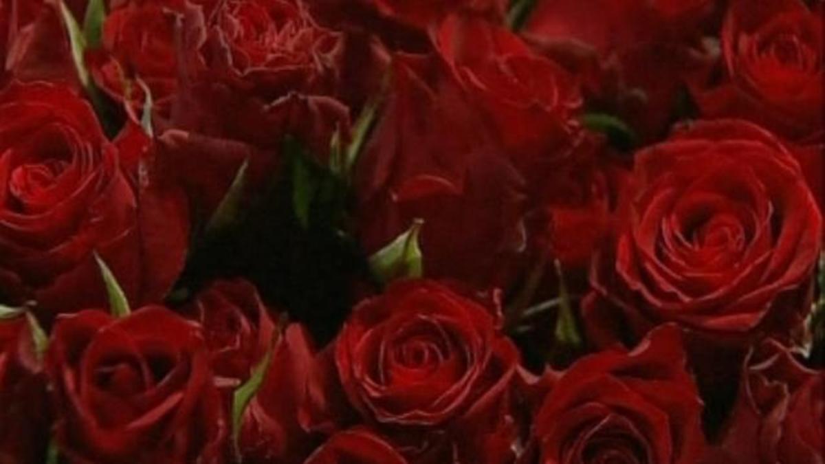 Δικαστήριο τον διέταξε να αγοράσει 777 τριαντάφυλλα στη σύζυγο | Newsit.gr