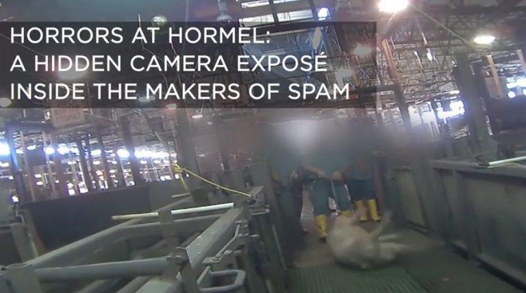 Φρικτό βίντεο από βασανιστήρια σε σφαγείο ζώων! ΠΡΟΣΟΧΗ, ΣΚΛΗΡΕΣ ΕΙΚΟΝΕΣ | Newsit.gr