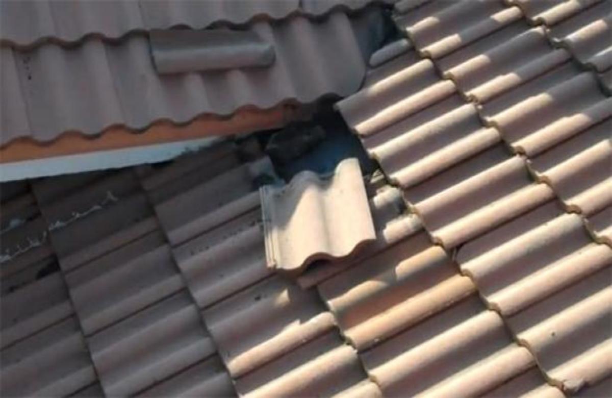 ΑΠΙΣΤΕΥΤΟ! Ανατριχιαστικό θέαμα κάτω από τα κεραμίδια!   Newsit.gr