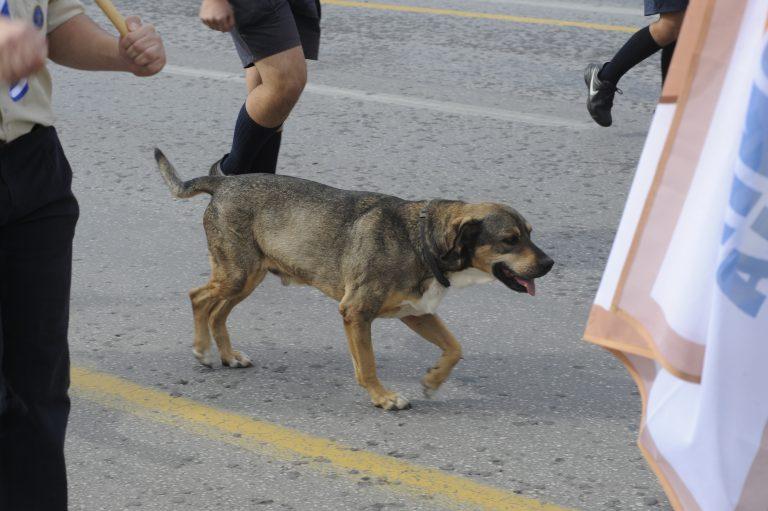 Πρέβεζα: Κρέμασαν σκύλο μέσα σε παλιό αυτοκίνητο!   Newsit.gr