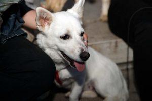 Θεσσαλονίκη: 10.000 «σκυλόφατσες» στο facebook των σκύλων