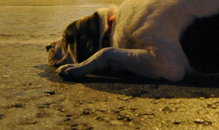 Κομοτηνή:  Επικήρυξαν με 1.000 τους δολοφόνους δύο σκύλων   Newsit.gr