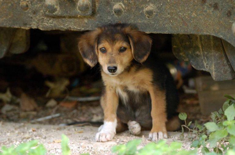 Πάτρα: Υπέγραψαν σύμβαση για τη φροντίδα των αδέσποτων ζώων   Newsit.gr