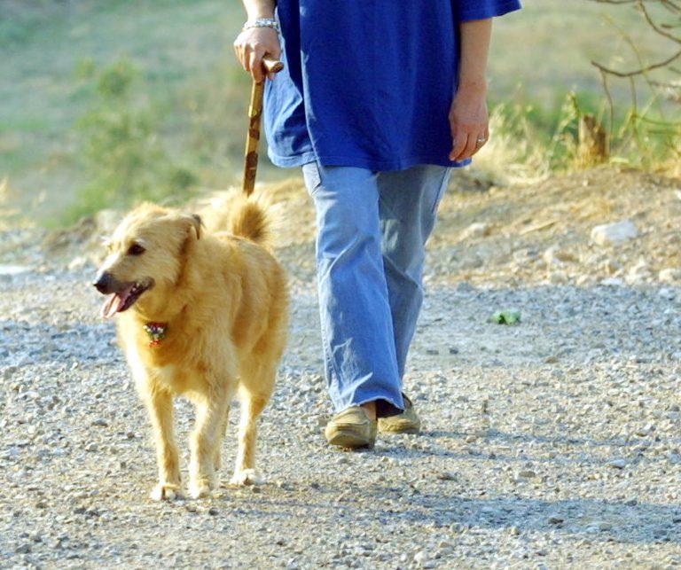 Θεσπρωτία: Τρομακτική βόλτα για ιδιοκτήτη σκύλου – Έπεσε σε γκρεμό 10 μέτρων! | Newsit.gr