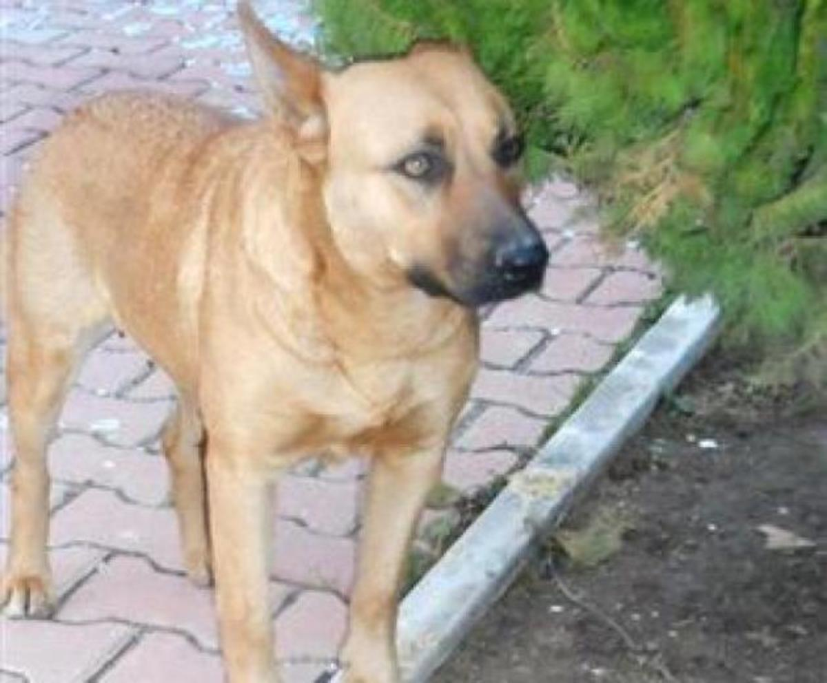 ΤΟΥΡΚΙΑ: Βιασμοί …σκύλων!!!   Newsit.gr