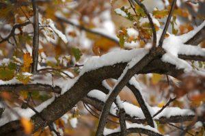 Καιρός: Παραμονή Χριστουγέννων με χιόνι και παγετό!