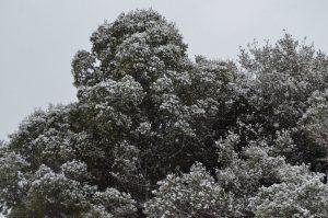 Καιρός: Παραμονή Πρωτοχρονιάς με χιόνια και -6 στα βόρεια!