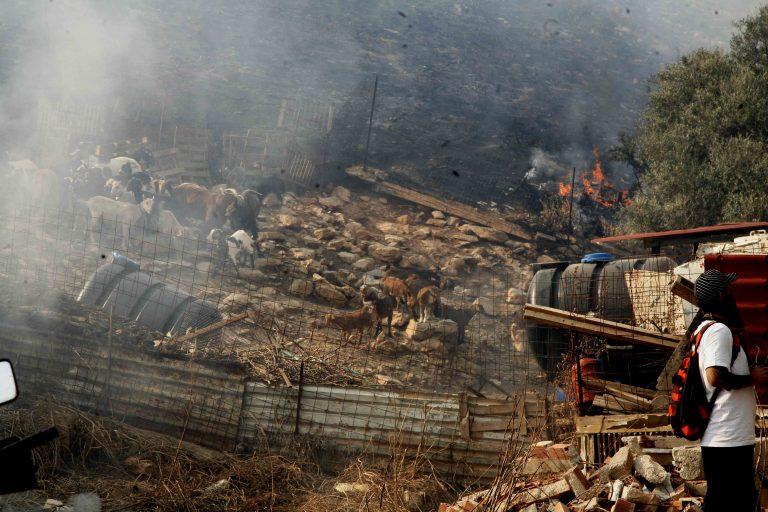 Κοζάνη: Κάηκαν ζωντανά 50 πρόβατα και 15 αρνιά! | Newsit.gr