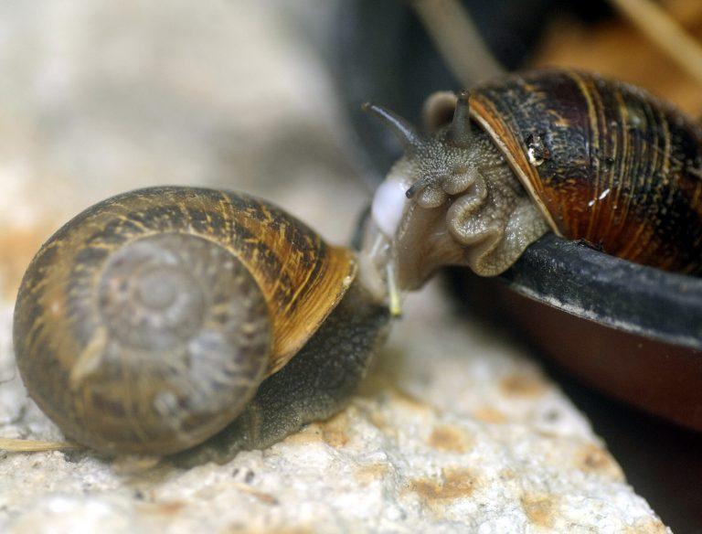 Σαλιγκάρια: Σταθερή… χρηματιστηριακή αξία! | Newsit.gr