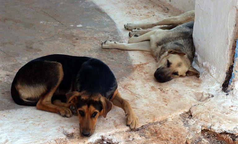 Αγριότητα: Βρήκαν τραυματισμένο σκυλάκι και το πέταξαν στα σκουπίδια!   Newsit.gr