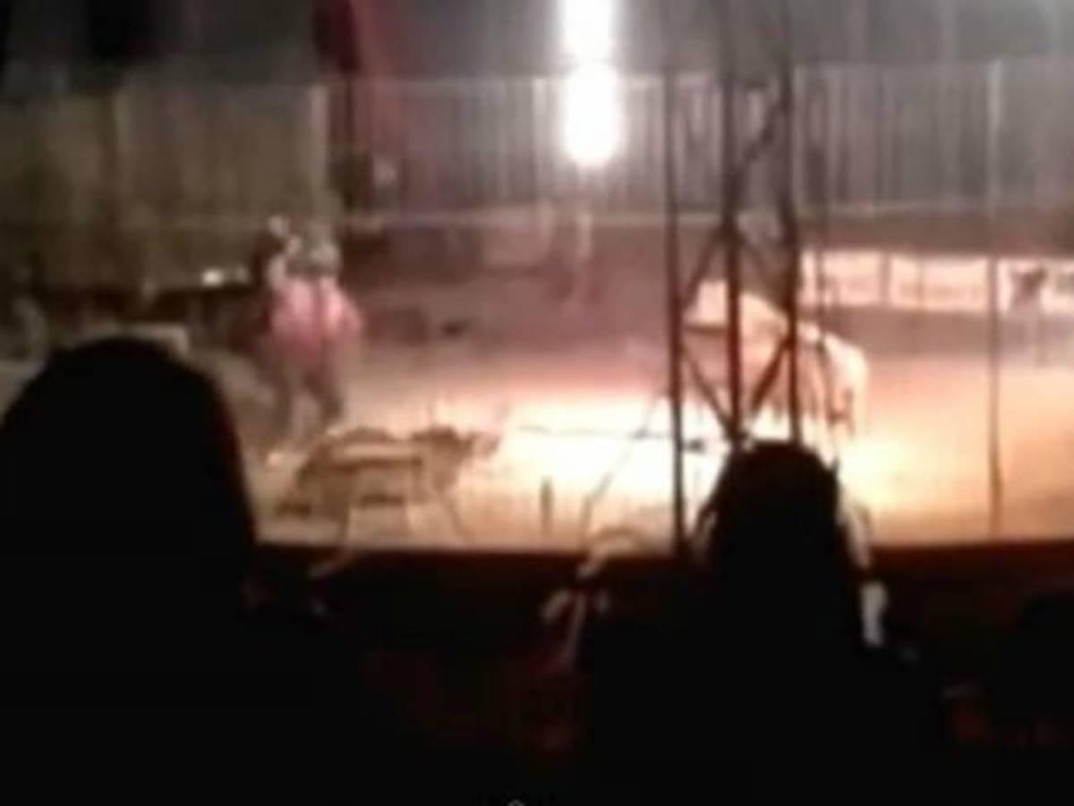 Ανατριχιαστικό βίντεο! Τίγρης σκότωσε εκπαιδευτή μπροστά στους θεατές τσίρκου! | Newsit.gr