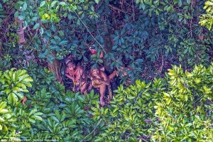 Χαμένη φυλή του Αμαζονίου! Ζουν όπως οι πρόγονοί τους πριν 20.000 χρόνια!