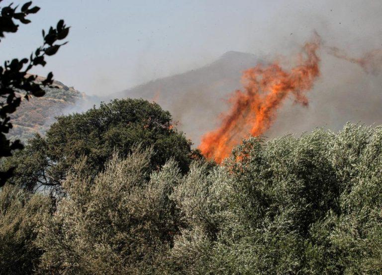 Νέα φωτιά απειλεί τη Βιάννο – Κινδυνεύει το πευκοδάσος του Συκολόγου | Newsit.gr