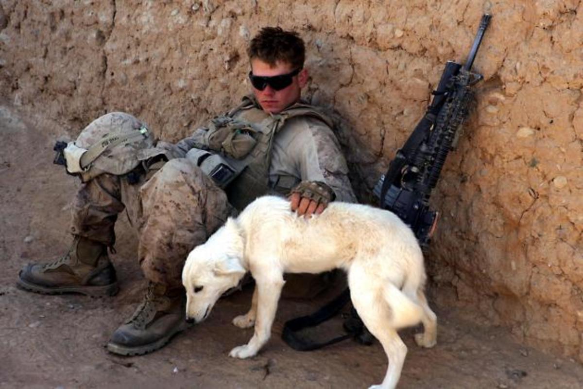 «Τα σκυλιά του πολέμου»!Εκπληκτικό ρεπορτάζ,εντυπωσιακές φωτογραφίες | Newsit.gr