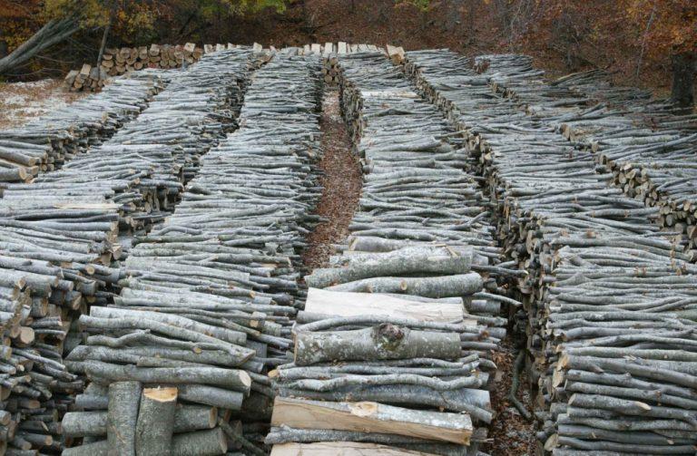 Κόβουν τα δάση της Ελλάδας για να τα πουλήσουν ως καυσόξυλα – Πυροβολούν ακόμη και τους δασοφύλακες για να ξεφύγουν | Newsit.gr