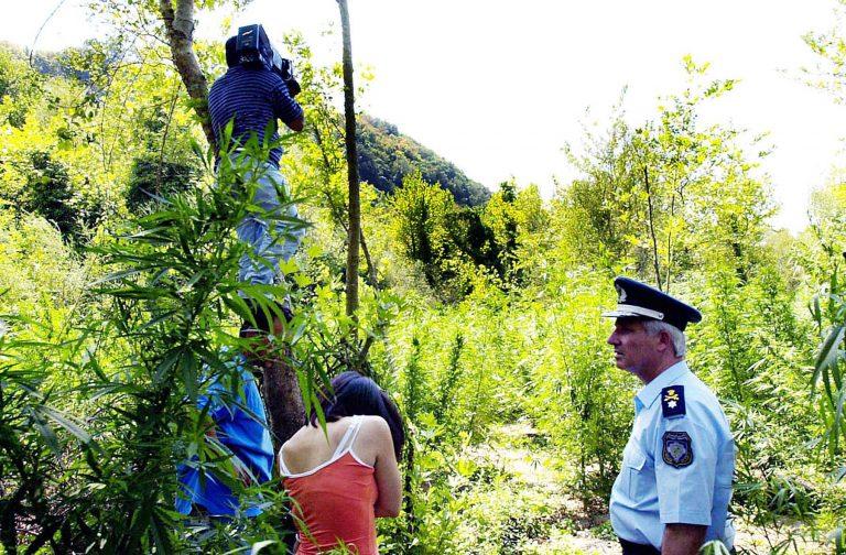 Καρδίτσα: 16χρονος μαθητής καλλιεργούσε χασίς! | Newsit.gr