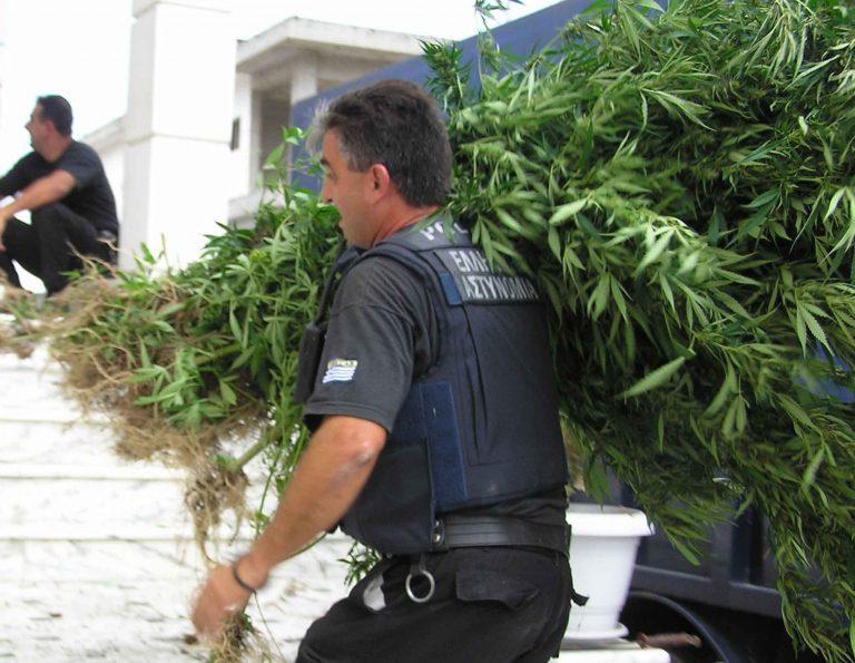 Η χασισοφυτεία στο Τατόι είχε ως και συναγερμό! | Newsit.gr