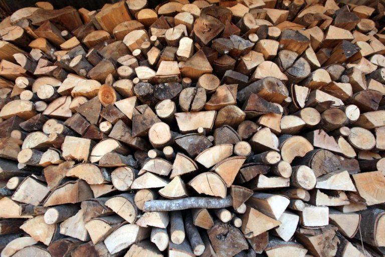 Κρήτη: Καταστρέφουν το δάσος για να πάρουν… καυσόξυλα λόγω κρίσης | Newsit.gr
