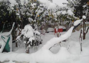 Κύμη: Μήνυση σε δήμαρχο και αντιδημάρχους για τα προβλήματα από τον χιονιά