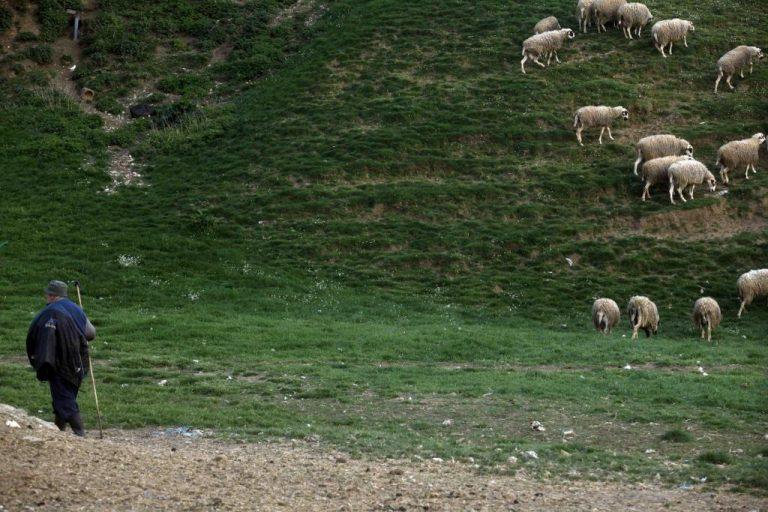 Κρήτη: Οι ζωοκλέφτες άρπαξαν τον κτηνοτρόφο για να τον… ανακρίνουν! | Newsit.gr