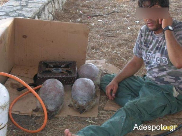 Λευκάδα: Τσιγγάνοι ξυρίζουν και ψήνουν ζωντανούς σκατζόχοιρους! | Newsit.gr